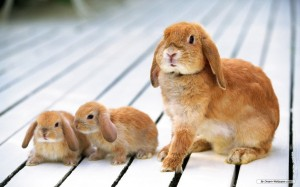 Bunnies-bunny-rabbits